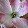 same pretty flower...