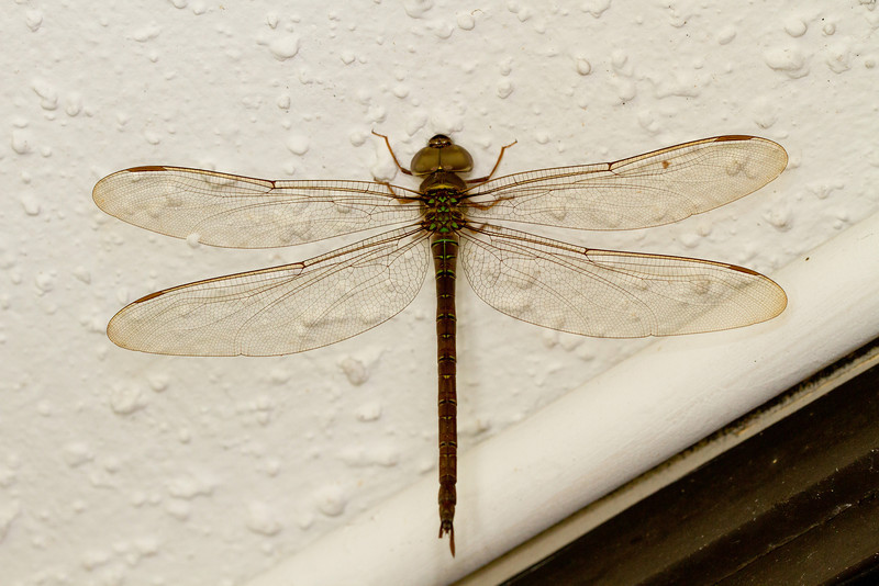 We flew to Ft. Lauderdale and stayed overnight to be sure to make it to the ship on time. This large dragonfly was hanging on the wall of the motel (outside).