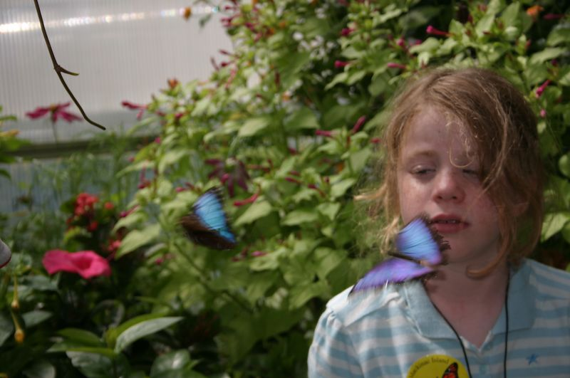 Butterfly House.  The blue butterflies almost never stopped, and when they did they closed their wings.  This is one of the best shots I got.  The girl was standing very still, waiting for them to land on her.