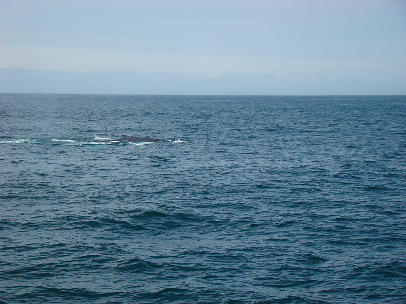 Our 1st whale sighting.
