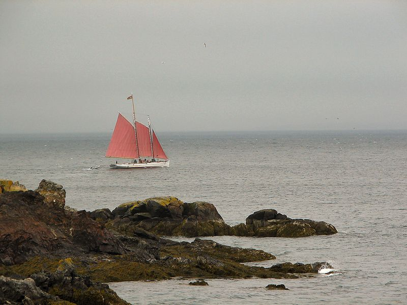 Whale Watching at the  Bay Of Fundy
