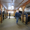 the main barn, where the stallions and geldings hang out