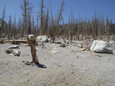 Looking more like an alien landscape the carbon dioxide seeping from volcanic action below is destroying the trees.