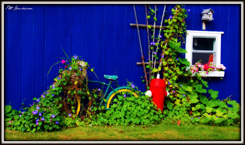 Nice mix of colours in a shed on McNab Street in Forest.