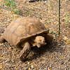 Tonka the Tortoise