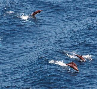 Dolphins accompanied us into Acapulco bay.