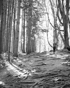 Patty Etheral Woods Middleburgh, NY