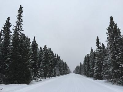 Spruce & Tamarack Trees @ Sax-Zim Bog [Arkola Road]