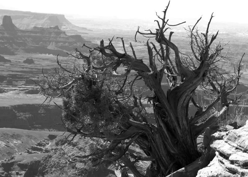 Moab UT 2013 Vol 5