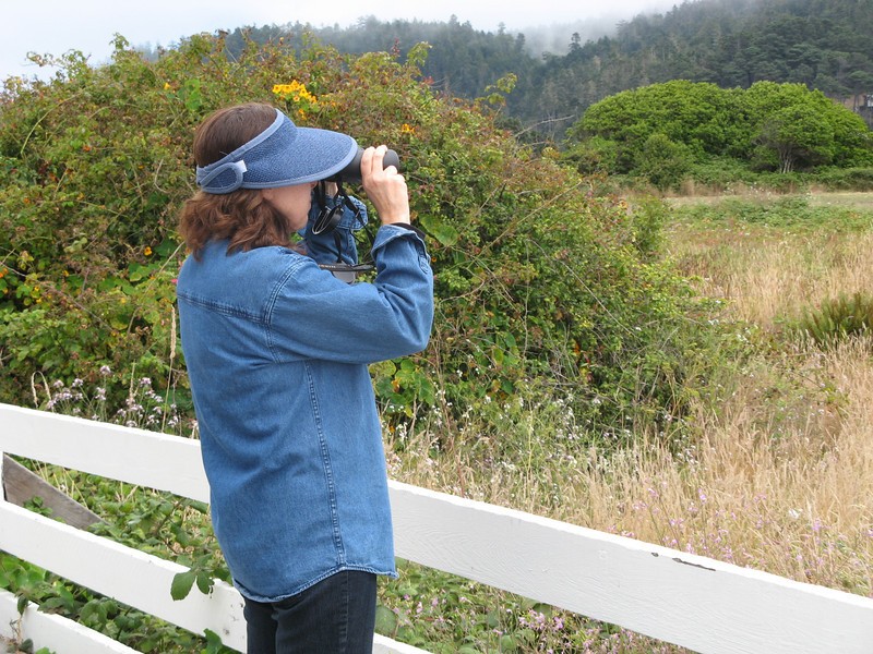 We hiked out to the cliffs to try out our new binoculars.