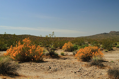 Mojave National Preserve  (7d)