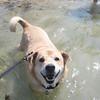 Conan likes the water!
