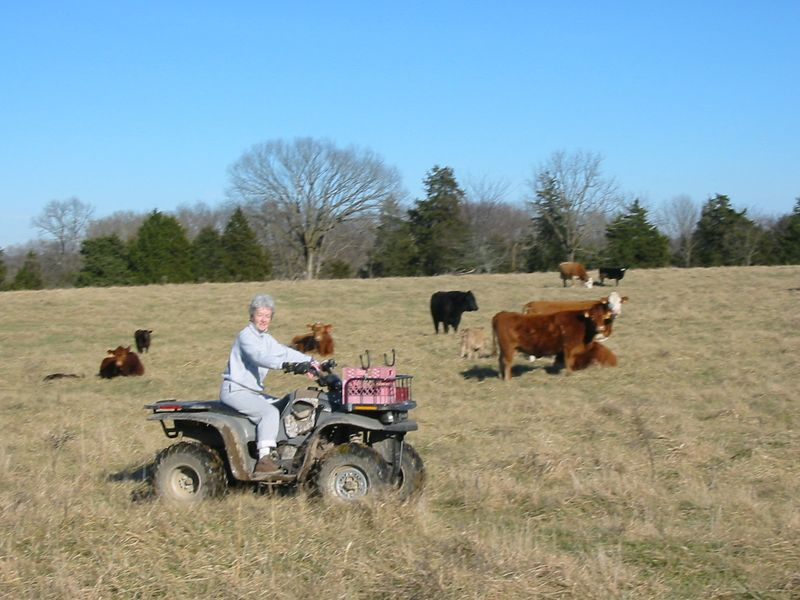 on the farm with 'the ladies'.  And the used to be bulls.