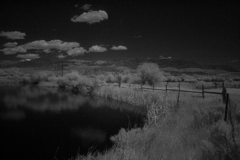 Another infrared shot
