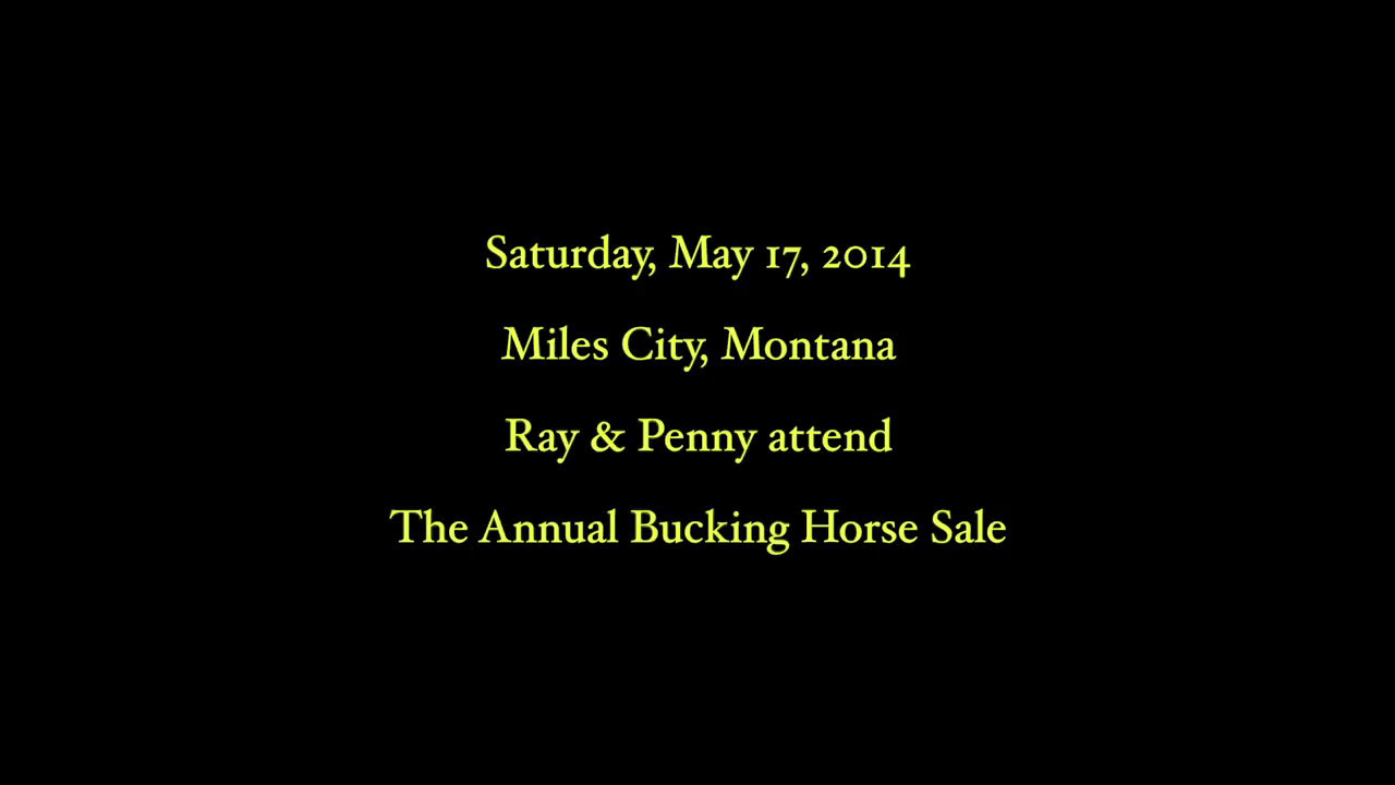 Bucking Horse Sale - Rodeo2