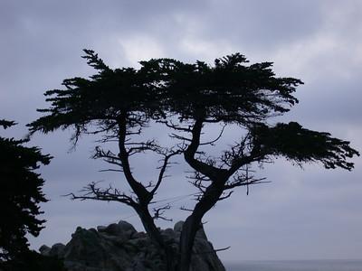 Monterey Bay Feb 2004