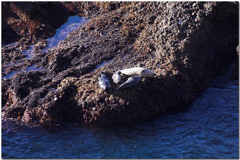 2005 Monterey Trip (Coast Line) - 012