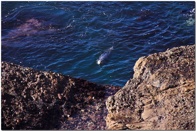 2005 Monterey Trip (Coast Line) - 011