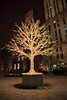 Lighted tree in Plaza d'Armes