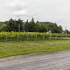 We did a wine tasting tour and the first stop was at Vignoble et Cidrerie Coteau Rougemont.