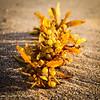 Seaweed tossed ashore