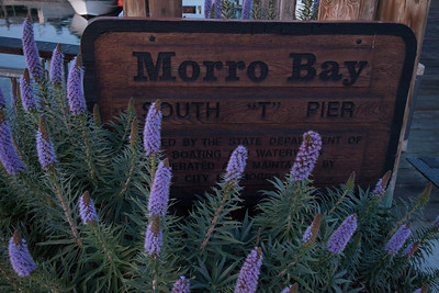 20130406_Morro_Bay_020