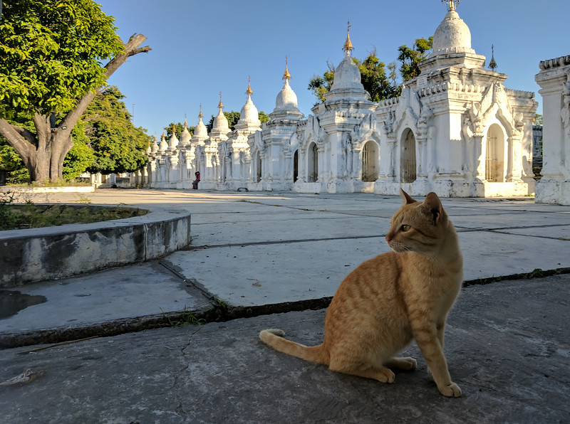 Cat at Kuthodaw Paya with The World's Biggest Book