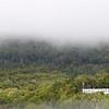 A beautiful foggy day...