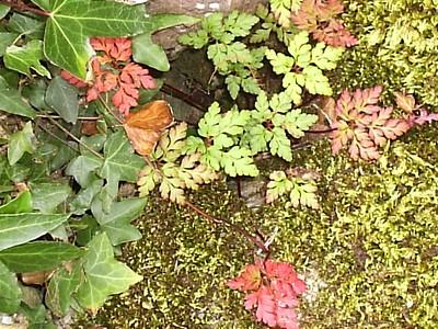 beginngs of autumn