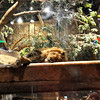 Lion habitat at the MGM Grand