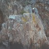 Eagle on the rocks.