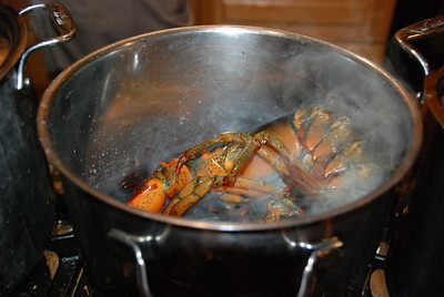 Into the pot! Laura's daughter drove down to the ocean a couple of blocks away to get seawater to cook our lobsters and make it authentic.