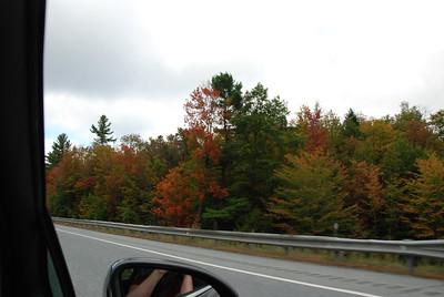 New Hampshire foliage.
