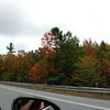 New Hampshire foliage.