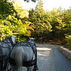 We're off! These carriage roads were built by the Rockefeller family, who donated the land for the park.