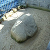 Plymouth Rock. Don't get too excited!!!