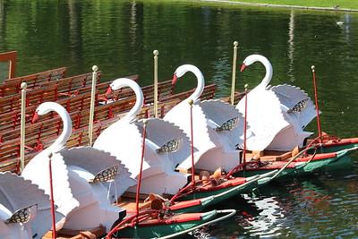 Swan Boats @ Boston Common