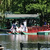 Swan Boats @ Boston Common