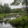 Beaver Dam on Page Pond