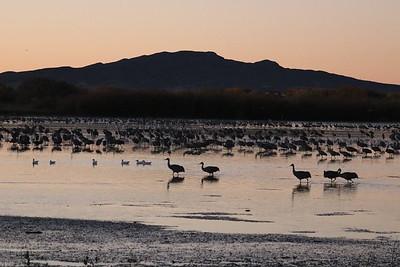 New Mexico Birding
