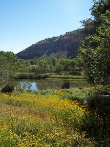 Day 2- Wildflowers, lake, and mountains.