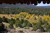 Pecos River Aspens