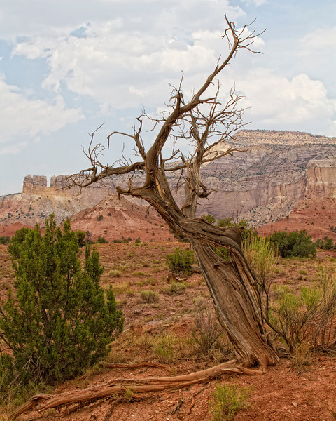 Ghost Ranch...Georgia O'keefe Landscapes