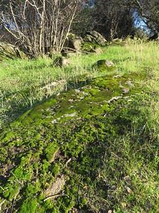 Mossy slab.