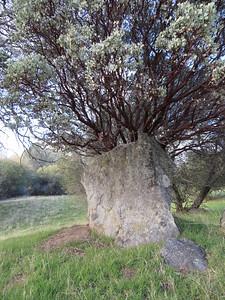 Plant in a granite vase?