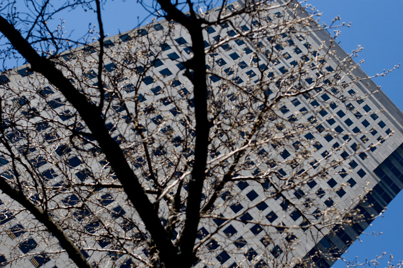 Tree and a Building.