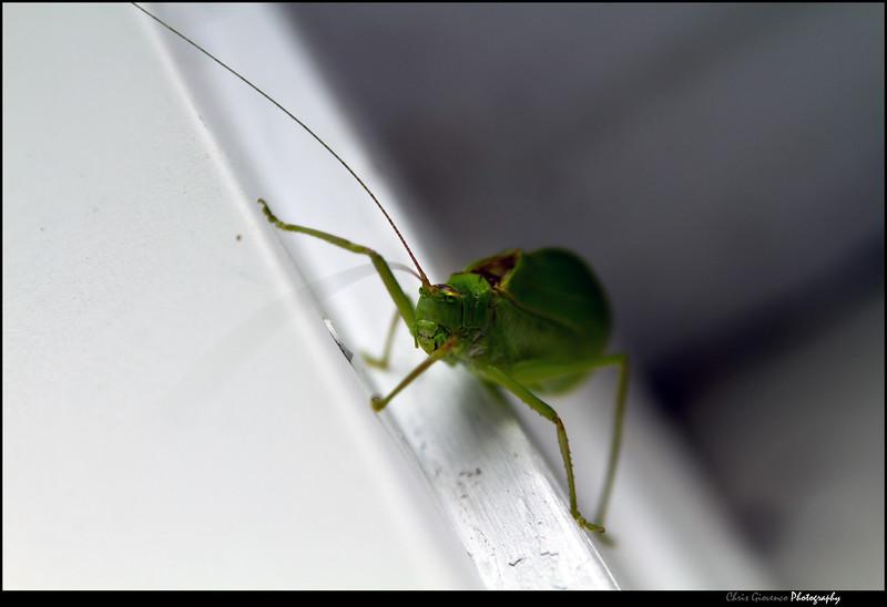 Creepy Leaf Bug