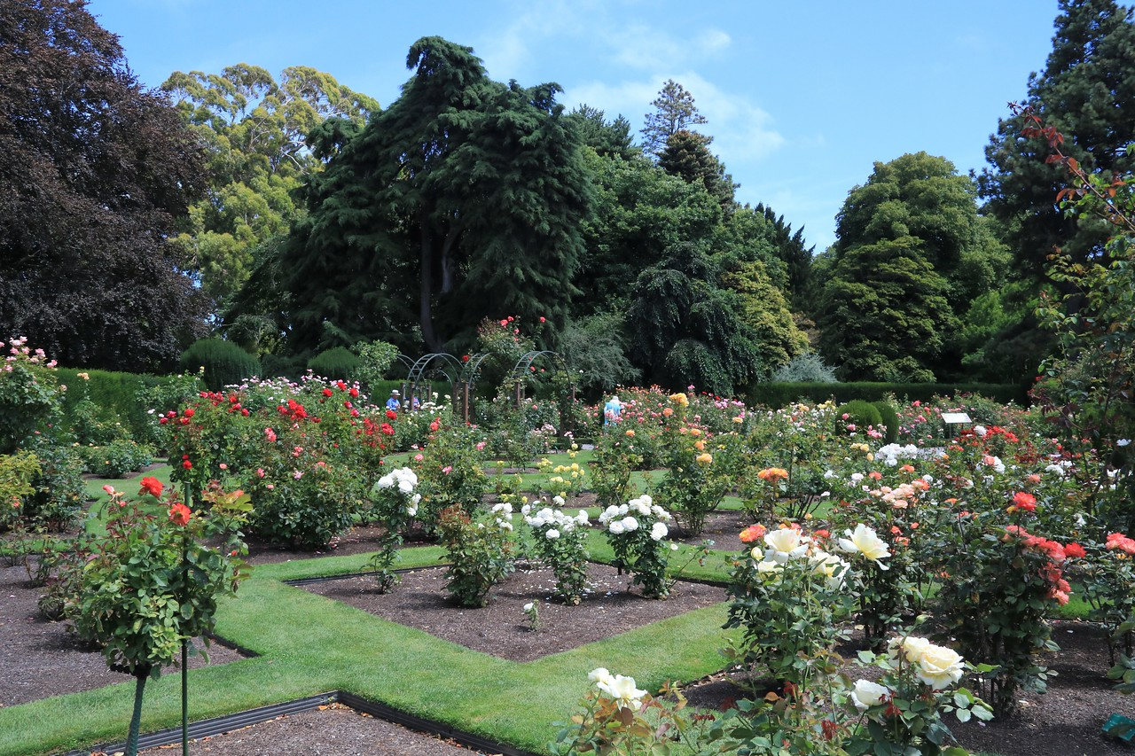 There was a large rose garden surrounded by tall hedges with entrances on each side.  The roses were a bit beyond peak, but still quite impressive.