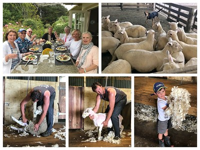 It's also all about the sheep here in New Zealand...wonderful lunch on a sheep farm...there are 10 times as many sheep as people here🐑🐑