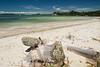 A log on the beach at Snells Beach.<br /> -----<br /> Un tronc d'arbre le long de la plage à Snells Beach.
